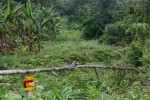 How safe is a pipeline crossing a remote rainforest? Photo by Christiane Badgley