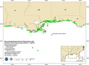 The green circles indicate where stranded dolphins have been found along the Gulf Coast since February 2010, and the pink circles indicate where they have been found in the past week. The squares indicate other beached species. Photo: NOAA