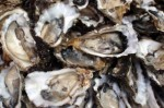 Gulf oysters: still sick two years after the BP spill